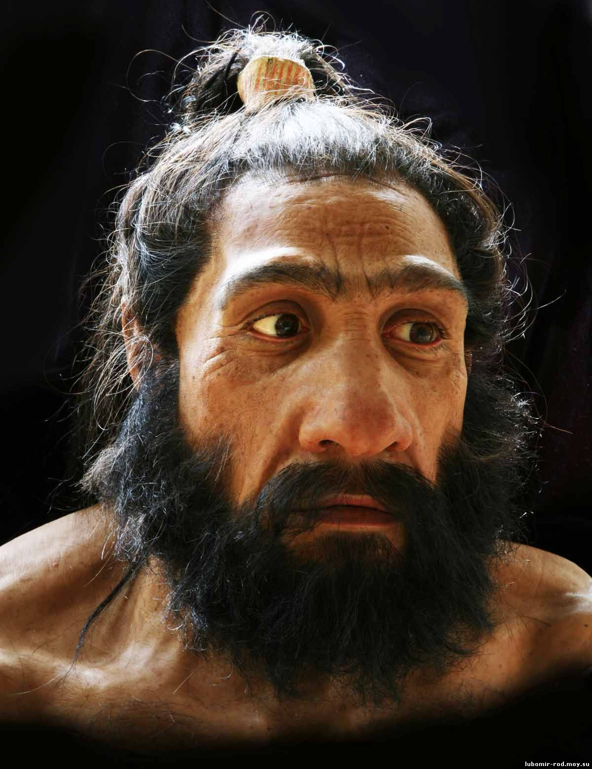 the fall of neandertals The newly dated cave paintings—perhaps the world's oldest—are evidence that neanderthals were not a distinct species, one expert says  of horses and bison—that dates to after the fall.